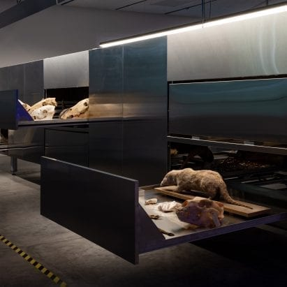 Israel puts skeletons and taxidermy on display at Venice Architecture Biennale – Architecture – Dezeen